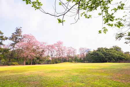 Green park nature landscape