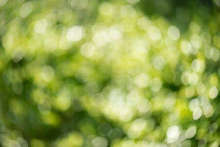 defocus: Green nature blurry background, defocus