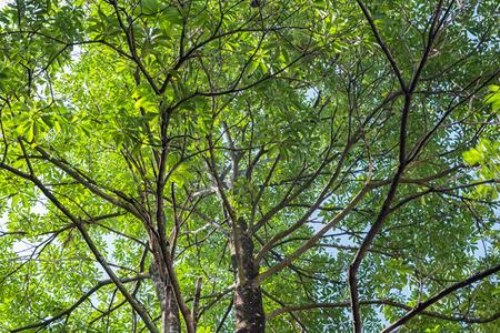 angle: Trees low angle view Stock Photo