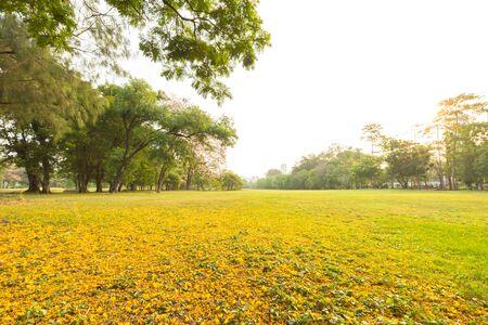 urban gardening: Autumn with green park landscape and urban gardening