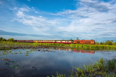 reed stem: Wetlands in Nature Reserve with train , Fertile swamp and various biology in nature, Located Nong Dea Swamp at Udonthani Province, Thailand