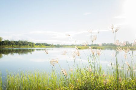 Beautiful landscape with grass flower at the water edge