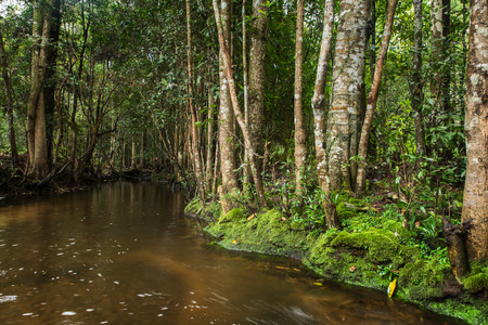 evergreen forest: Evergreen forest and stream flow