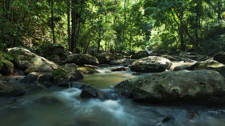 evergreen forest: Evergreen forest with stream flowing Stock Photo