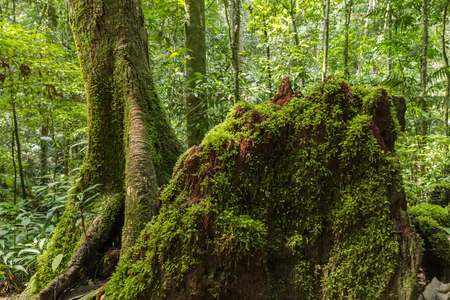 Green moss on the rotten wooden Stock Photo