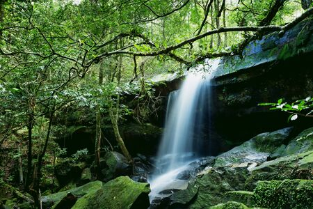 evergreen forest: Beautiful waterfall and green moss at the evergreen forest