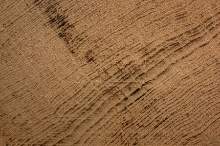 hinoki: Hinoki wooden background and textured, Detail of tree ring cross section Stock Photo