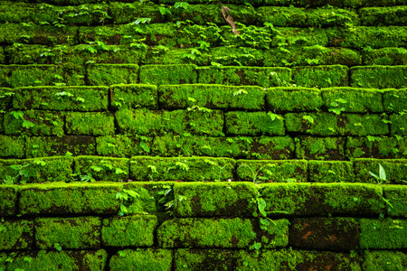 Green moss growing on old brick wall