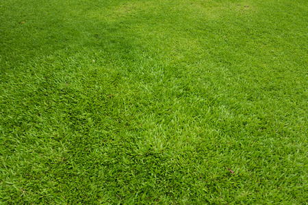 Green grass background and textured, Top view and detail of turf floor at soccer field Banque d'images - 106165676