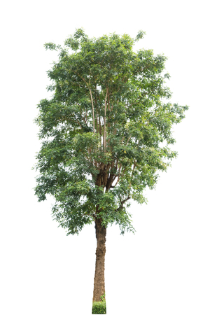 Tree isolated on white background Banque d'images - 109886939