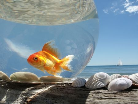 confined: A Goldfish in its aquarium on the beach, prisoner of this glass bubble ...