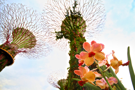 vanda: A Small Part of Gardens By The Bay. The contrast and difference of the orchid and the giant tree, yet both symbolizes the pride of Singapore. Editorial