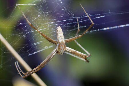 Spider Web Stockfoto