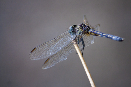 Resting, Dragonfly