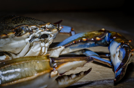 blue crab side view