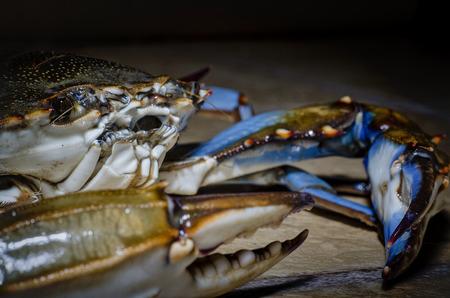 crab pots: blue crab side view