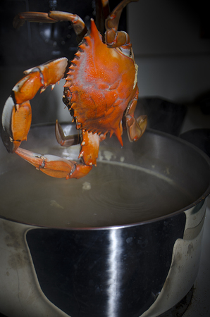 Cooked crab out of pot Stock Photo