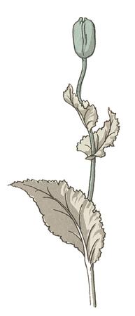 artsy: watercolor poppy II