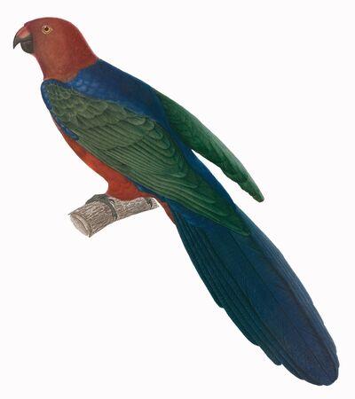 tropical bird: tropical bird