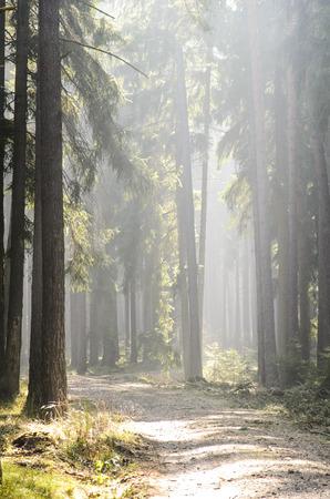 Waldpfad mit Sonne am Ende