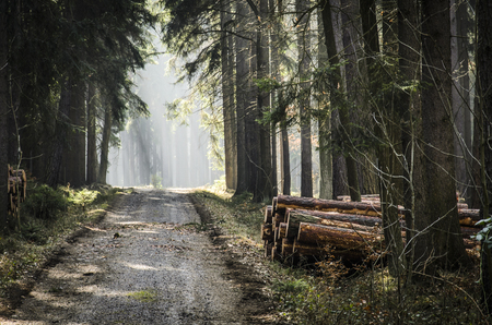 timberland: Forest path with sunshine at the end