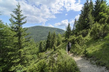 mala fatra: Mala Fatra mountain, Slovakia, Europe - Tourist path in National park Mala Fatra