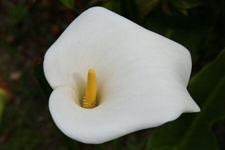 white chalice