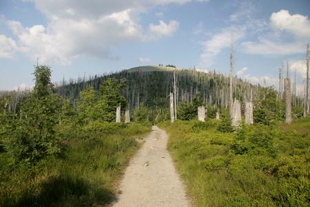Mount Lusen photo