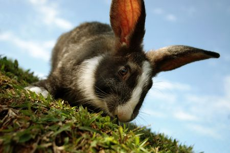 A closeup shot of a rabbit on a slope