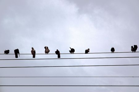 Birds sitting inline on a telephone line
