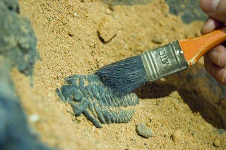 Excavating dinosaur fossils Stock Photo