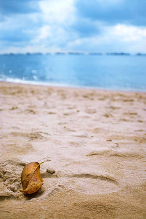 A photograph of a beach scene with focus on a leaf resting at the sand and the sea blurred in extreme bokeh Stock Photo