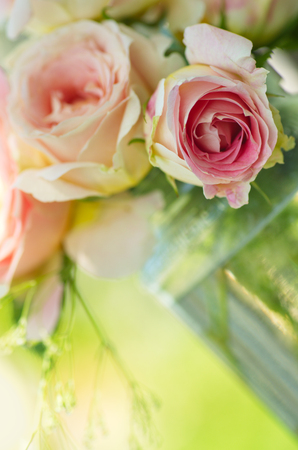 feminine background: pink rose flowers on beautiful blur background. Pink roses bouquet in a garden