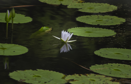Close up lotus flower and leaf pattern Stockfoto - 109506410