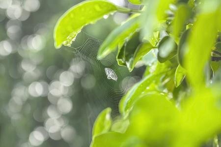 The green natural background, spider wed on leaf