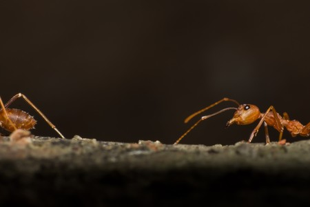 macro ant in nature, close-up of insect in the nature, macro insect