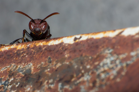 hornet on nest, macro insect in wild, animal wild life, bug in nature
