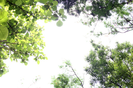 Thai Nature photo