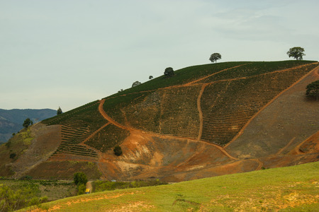 Coffee plantation in the moutains of south-east Brazil