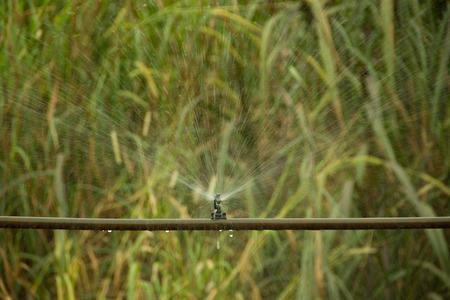 third world: Third world irrigation system in operation on an organic farm Stock Photo