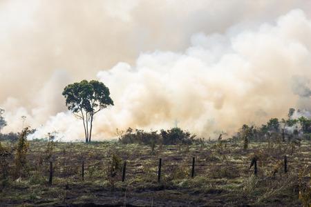 アマゾニア森林牧草地のためのスペースを開くへの書き込み 写真素材