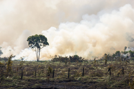 deforestacion: Amazonia bosque que se quema para abrir espacio para el pastoreo Foto de archivo