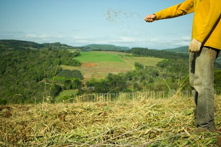 Man Hands Sowing Oat Seeds on the Field Stock Photo