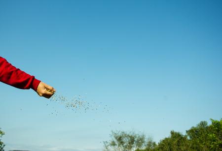 Woman Hand Sowing Seeds on the Land Zdjęcie Seryjne - 46632101