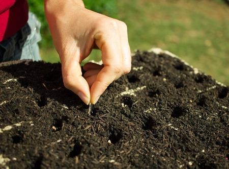 Woman Hand Planting seeds on germination tray Stock Photo