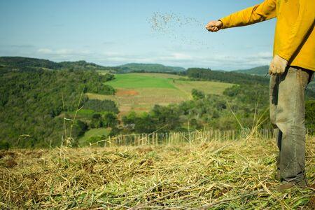 siembra: Semillas de las manos del hombre siembra de avena en el campo Foto de archivo
