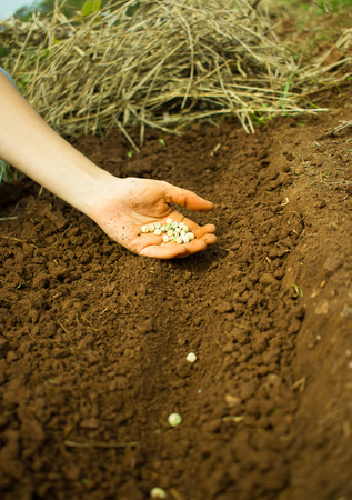 siembra: Sembrando Semillas Mujer mano en el suelo