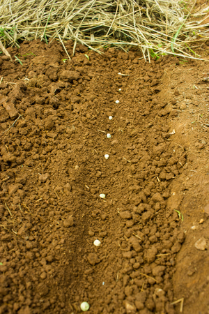 Seeds into the Soil