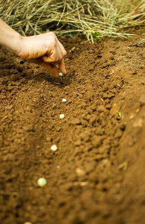 Woman Hand Planting Seeds into the Soil Stock Photo