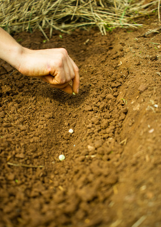 Woman Hand Sowing Seeds into the Soil Zdjęcie Seryjne - 46637056